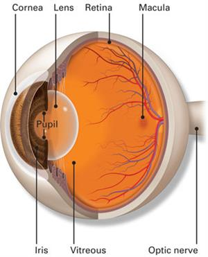 Vitreous-Retina Services - Sunayana Eye Hospital